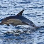 Dolphins in Durban seen from the Spirit of Elan